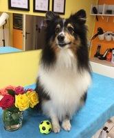 Hundesalon Ziborich bringt Hunde schöner in den Frühling