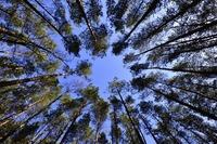 Mit Eco-Domains und anderen Öko-Domains für Schutz der Natur und Umwelt werben