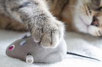 Spielzeug für Katzen – Spiel, Spaß & Beschäftigung