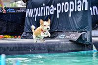 Beim Trendsport Dog Diving heben Hunde ab