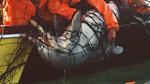 Südafrika: Bleifarbene Delfine sollen nicht länger in Hainetzen sterben