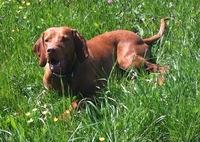 Hundewanderungen - neu mit der Wanderey