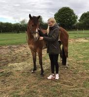 Patenschaft für ein behindertes Pferd