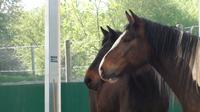 hr fernsehen - alles wissen: Beitrag zum Managertraining mit Pferden