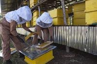 Äthiopien: Honig schafft neue Arbeitsplätze