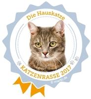 Die Hauskatze ist die beliebteste Katzenrasse des Jahres 2017