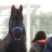 Manager-Pferdeseminare mitten in Deutschland