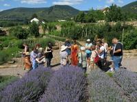 Lavendelblüte  in der Pfalz