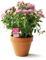 Neues Label für nachhaltige Blumen und Zierpflanzen