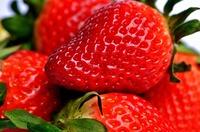 Sommer in Fläschchen: Erdbeersirup
