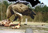 Seltenes Experiment zur Orientierung von Jungvögeln mit überraschenden Ergebnissen