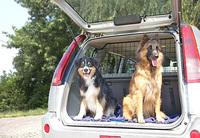 Hund im Auto lassen: bei sommerlichen Temperaturen lebensgefährlich