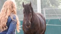 Zertifizierung zum HorseDream Pferdecoach