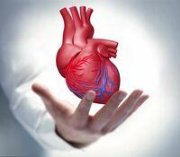 Bereitschaft zur Organspende rückläufig
