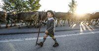 Viehscheid Oberstaufen: Mehr als 1000 Stück Vieh   kommen von den Sommerweiden ins Tal