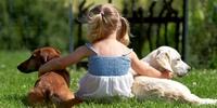 Darum können Hunde und Menschen gute Freunde sein