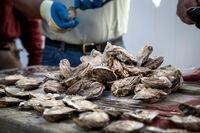 Wichtigstes Austernfestival in Virginia feiert 60. Geburtstag