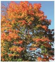 Neuer Reisereport: Herbstrausch in vier Ländern