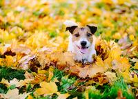 Herbst mit Hund 2017: Schnell noch mal weg auf vier Pfoten