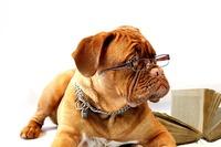 Hunde-Webseiten unter Dog-Domains veröffentlichen!