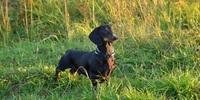 Hunde Ausbildung: Schutzhund, Blindenhund oder Rettungshund