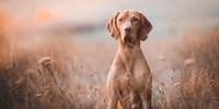 Beim Namen genannt: Ist der Hund des Menschen bester Freund?