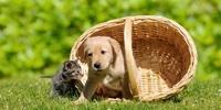 Haustiere immer mit Respekt behandeln