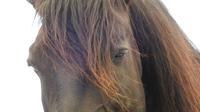 Was Führungskräfte von Pferden lernen können