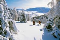 Zwischen Schnee und Schmankerln