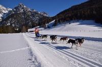 Faszination Schlittenhund im Tiroler PillerseeTal erleben