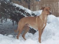 Bund Deutscher Tierfreunde warnt vor Risiken bei  Erkältungen