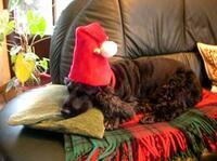 Gefährliche Adventszeit für Hund & Katz