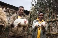 Hühner für Äthiopien - Zukunft schenken