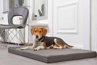 Orthopädische Hundematten, einfach genial