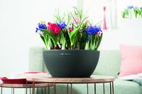 showimage Frühlingserwachen - mit den Pflanzgefäßen von LECHUZA