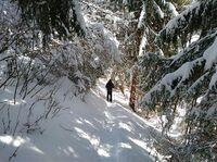 Traumdestination für Schneeschuhwanderer: Natur & SPA Resort Der Alpbacherhof****s