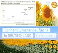 showimage EURALIS Körner-Sonnenblume ES Columbella ist die ertragsstärkste Sorte im  deutschlandweiten EU-Sortenversuch 2017 bei früher Abreife.