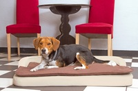 Der richtige orthopädische Hundeschlafplatz
