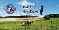 showimage Pferdegestützte Aus- und Weiterbildung