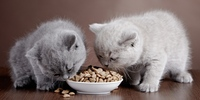 Katzennamen mit einer schönen Bedeutung