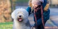 Fellpflege ist wichtig bei allen Hunderassen