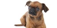 Welche Hunderasse entspricht meiner Persönlichkeit?