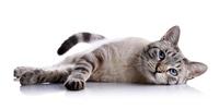 Kreative, außergewöhnliche Katzennamen: Tipps für die Suche