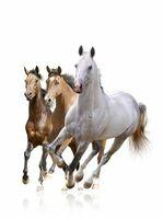 Mineralreiche Pflege für Gelenke, Sehnen und Haut der Pferde