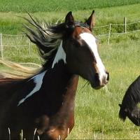 HorseDream entwickelt Persönlichkeiten