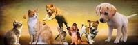 Tierbilder bei TierklinikenNet