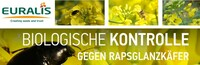 EURALIS Käfer-Kontrolle – biologische Kontrolle gegen Rapsglanzkäfer