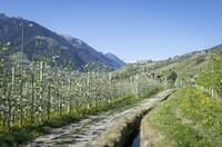 240 Kilometer Wanderwege direkt vor dem Design Hotel Tyrol