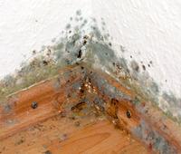 Bei hohen Außentemperaturen kommen gut gedämmte Häuser ins Schwitzen