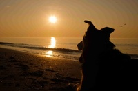 Bund Deutscher Tierfreunde gibt Tipps zur Ferienreise mit Hund